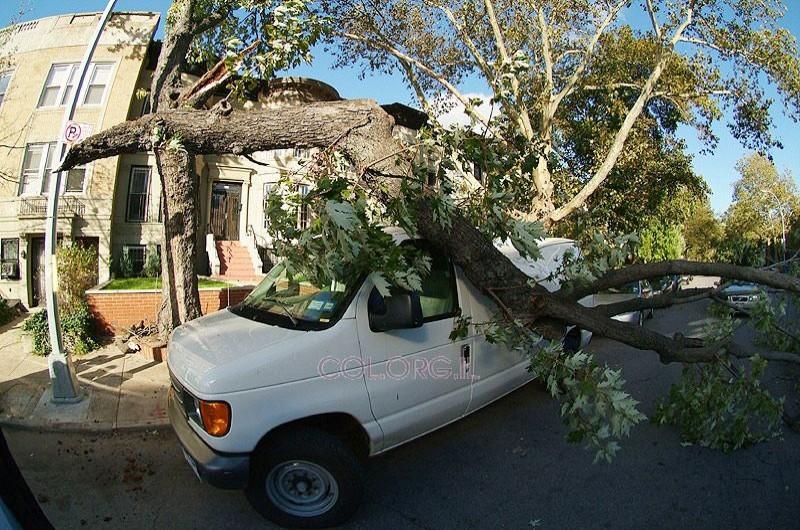קראון הייטס: עץ ריסק מכונית. אין נפגעים