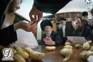 הרב לנדא מתריע: תולעים בתפוחי-אדמה