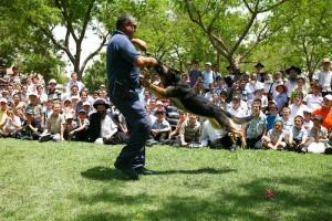 כלבים, סוסים וטרקטרונים בלב כפר-חב