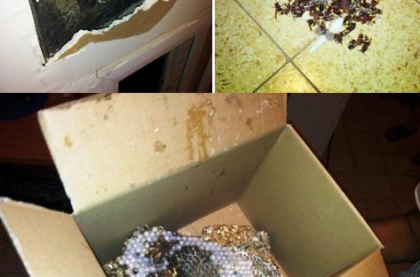 תופעה מפחידה: קן צרעות בקיר הבית ● תמונות
