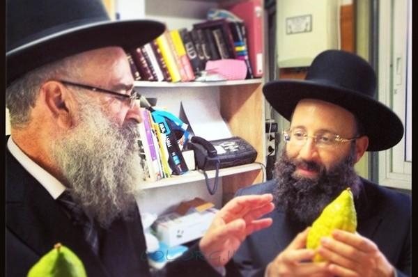 הרבנים למשפחת רבינוביץ' בחרו אתרוג בכפר חב