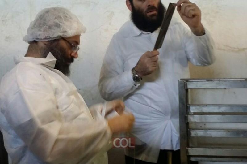 לקראת החג: שחיטת כבשים מהודרת בקפריסין