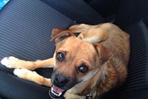 סכנה: כלבה חולת כלבת התגלתה במרכז הארץ