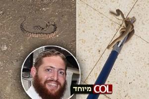 איך תזהרו מנחשים? מוישל'ה גוטמן מסביר