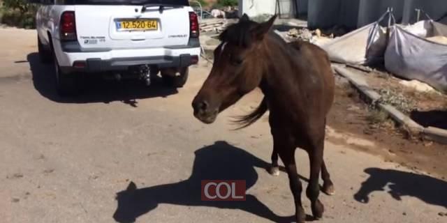 סוס בכפר 1