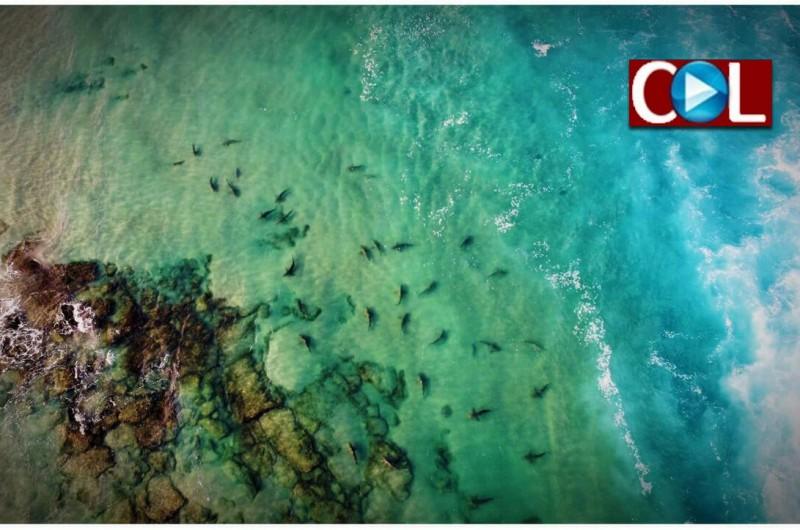 מה רבו מעשיך ה': להקת כרישים על-יד החוף ● וידאו