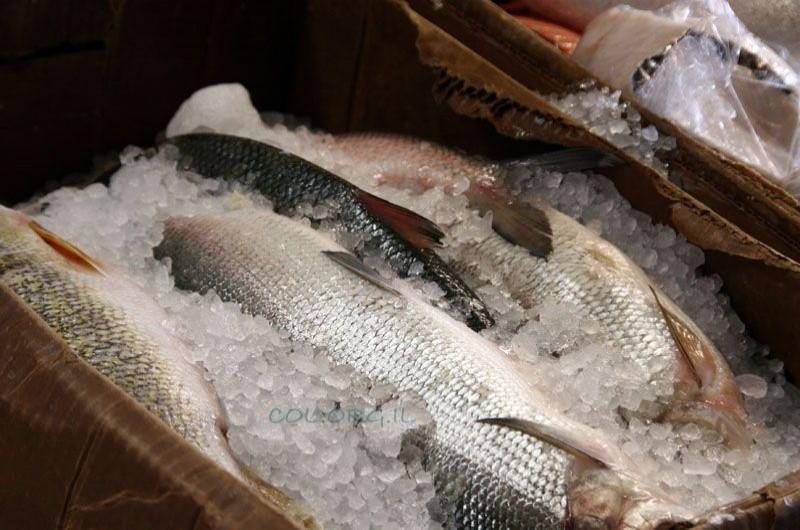 רגע לפני ראש השנה: כמה בשר ודגים צורכים הישראלים?