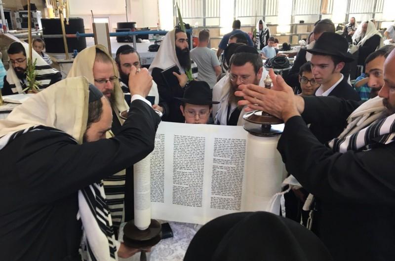 חובטים הערבות ומקיפים את הבימה בבית הכנסת 'בית מנחם'