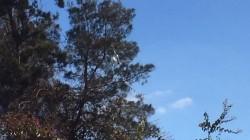 צרור בלונים חשוד נחת על צמרת עץ צמוד לבית חב