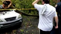 עצים שבורים, נזק לרכוש: סופה טרופית מכה בניו יורק; כך נראית השכונה החב