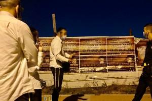 מי תלה מודעות נגד פאות בכפר חב