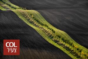 לא תאמינו, אבל זה אמיתי: השדות המופלאים של מורביה