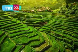 פלא עולמי | ככה נראות טרסות האורז המופלאות של העולם