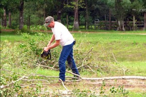 כריתת עץ בהלכה – האם מותר לכרות עצים?